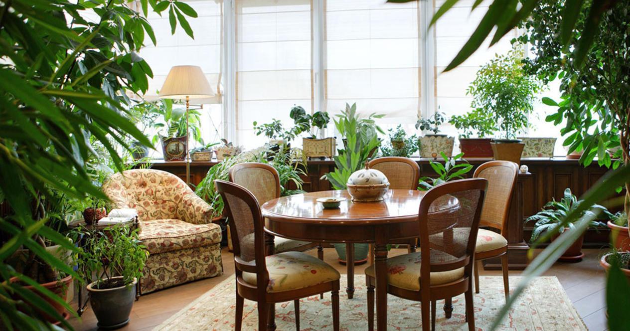 Украшение комнаты декоративными растениями
