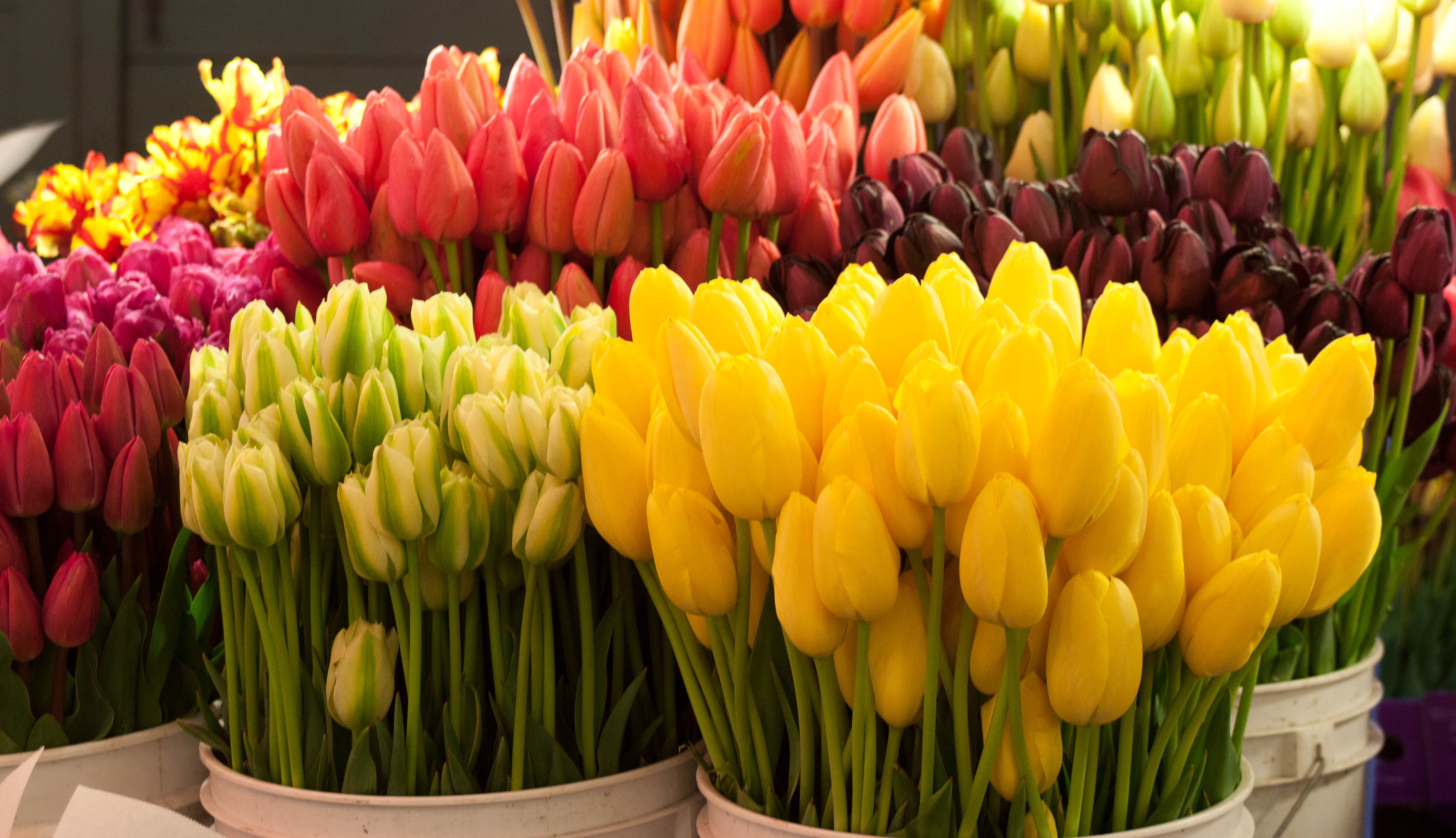 Заказать букет тюльпанов